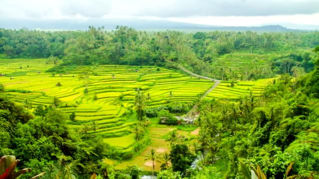 I campi di riso terrazzati/L