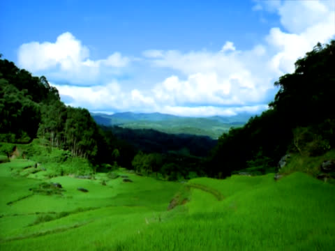 Terraced rice paddies central Sulawesi timelapse