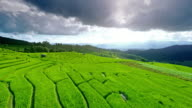 Terrasse rice paddy field