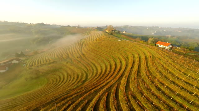 AERIAL Terraced Vineyards In The Mist