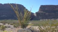 Texas Big Bend Santa Elena Canyon and ocotillo in sunshine
