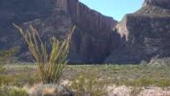 Texas Big Bend Santa Elena Canyon and sun on ocotillo