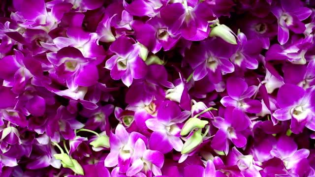 Thailändische Orchidee Blume-Markt