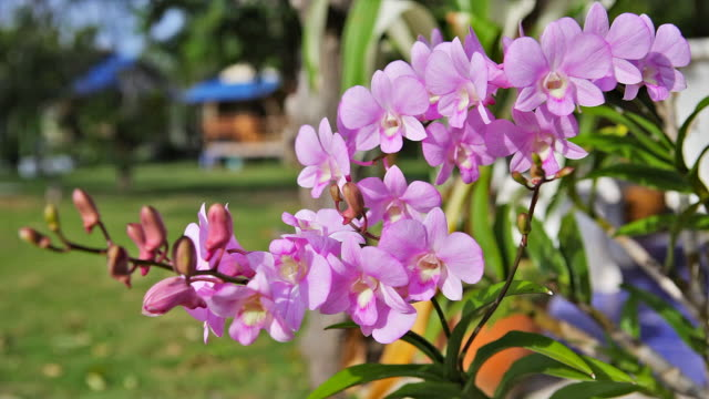 Thailand flowers on green lawn