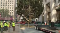 The 76foot tall spruce arrived from Connecticut and is ready to be decorated The tree ceremony will take place on December 4th and will remain up...