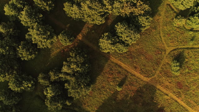 The aerial drone directly above view to the trails in the meadows near by the forest in the Pocono Mountains at the summer sunny evening.