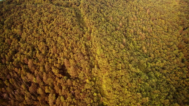 De luchtfoto drone-weergave van de Appalachian bergen in de buurt van door Jim Thorpe (Mauch Chunk) en Lehigh River in Carbon County, Poconos regio, Pennsylvania, USA