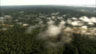 The Amazon Rainforest canopy stretches toward the horizon. Available in HD.