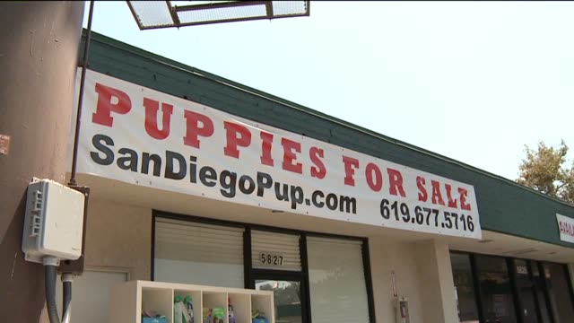 The Animal Defense Team began protesting a pet shop stating they have proof the store was getting their animals from a puppy mill on August 22 2012...
