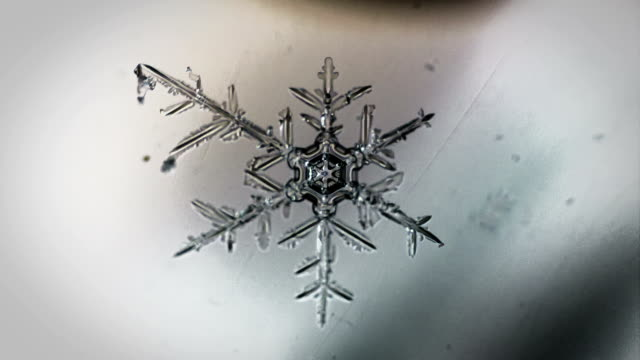 the appearance of lace snowflakes under a microscope
