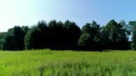 De camera Flying over hij velden met oplopende close-up aan de bomen. De lage hoogte aerial drone weergave de landweg in het bos in de Pocono Mountains op de zonnige zomerdag.