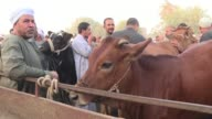 The cattle traders in the Ashmun market north of the capital Cairo jostled to lure customers into buying a buffalo or a sheep for Eid al Adha the...