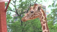 The Denver Zoo in downtown Denver including giraffes camels ducks and people enjoying a summer day at the areas largest zoo Denver Zoo at Denver Zoo...