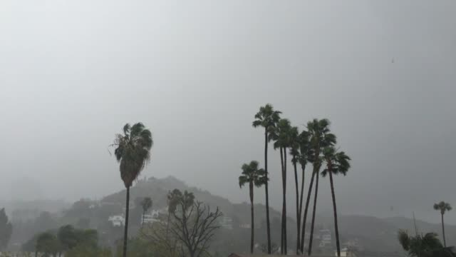 The El Niño thunderstorm and winds pummel palm trees in Los Angeles