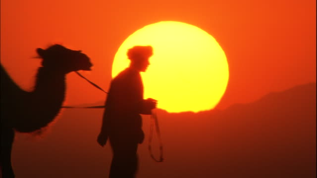 The evening sun and silhouette of camels