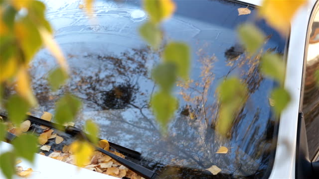 The fallen leaves of the birch on a white car.