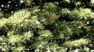 the fir tree branch