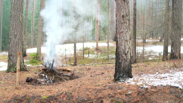 The fire in the winter forest.