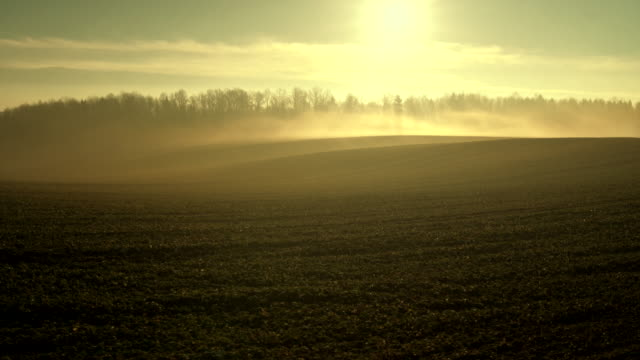 The fog over the fields at the early morning