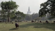 The grounds of Anuradhapura / North Central Province, Sri Lanka