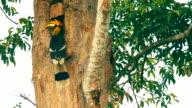 Het voeden van de neushoornvogel is in een houten pot op een boom.