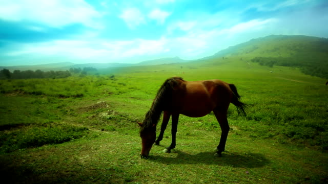 The horse in green field
