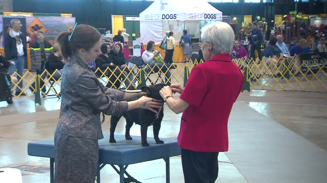 The International Kennel Dog Show at McCormick Place on March 02 2014 in Chicago Illinois