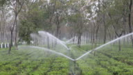 The irrigation system of the tea plantation at work Kalabari Tea Garden village is located in Nagrakata Tehsil of Jalpaiguri district in West Bengal...