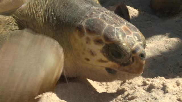 The Israel Nature and Parks Authority released four endangered sea turtles back to the wild at the Zikim beach in Israel on Thursday Israel
