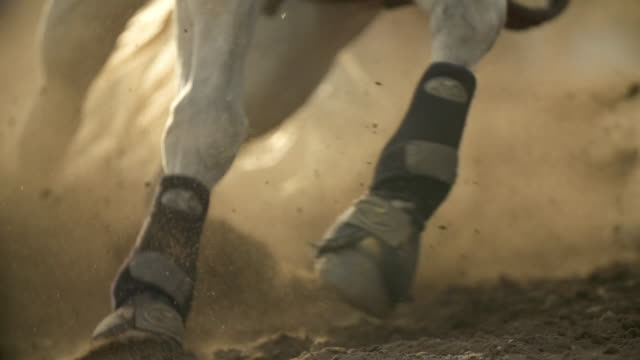 The legs of the horses running in the sand in slow motion