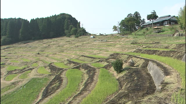 The Oyama Senmaida rice terraces cover a mountain in Japan.