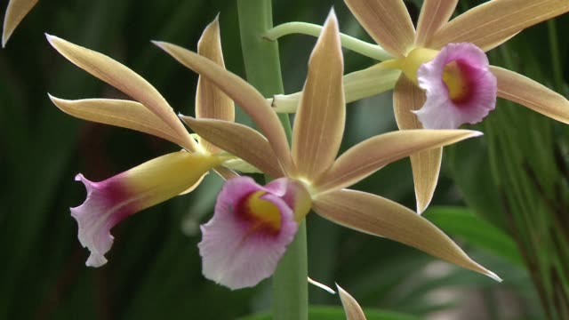 The Paris botanical gardens is opening its doors to a new exhibition of orchids featuring more than 1000 examples CLEAN Orchid exhibition at Paris...
