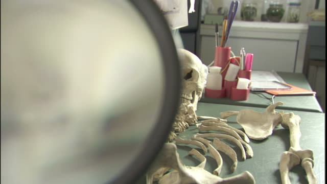 The parts of a human skeleton fill a long examining table.