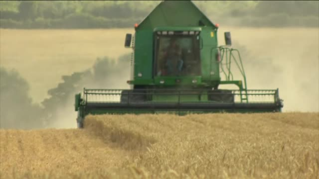 The process of wheat harvesting