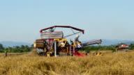 De oogst van de rijst met een auto