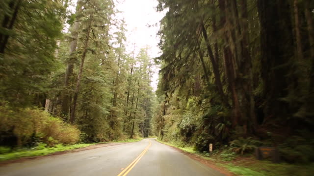 The road traveling through Redwoods National park on Highway 1 in California.