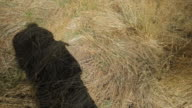 The silhouette/shadow of a woman taking off her hat, in the countryside of Victoria, Australia