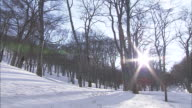The sun shines through a snow-covered Japanese Beech forest.