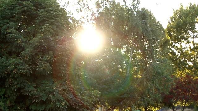 Die Sonne scheint durch eine Bäume