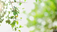 The Sunlight Through green leaves as branches sway in the wind. Abstract blurred background.