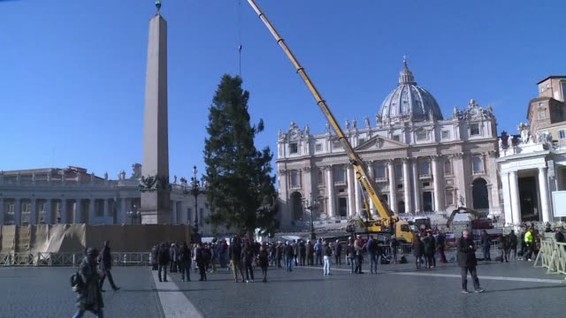 The traditional Vatican Christmas tree arrives in St Peter's Square directly from Poland