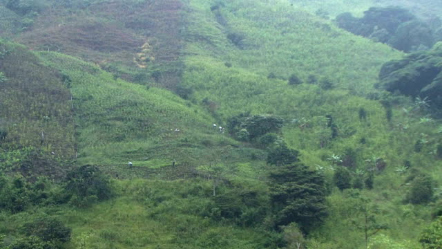 The United Nations on Thursday reported that the land used to cultivate coca leaves in Colombia the raw ingredient used to make cocaine has fallen by...