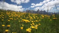 The Wind Blows on yellow flowers in the mountain
