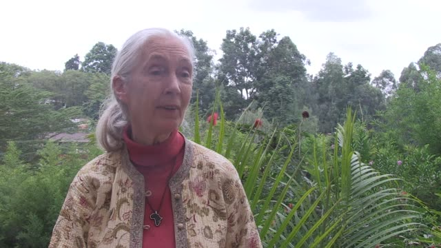 The worlds great apes face extinction within decades renowned chimpanzee expert Jane Goodall warned Tuesday in a call to arms to ensure mans closest...