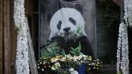 The world's oldest captive giant panda dies at the ripe old age of 37 more than 100 in human years her handlers in China say as they gave Basi an...