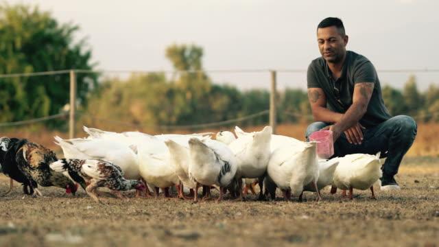 De jonge man voedt de dieren in de boerderij