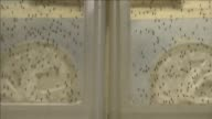 The Zika virus a mosquito borne disease suspected of causing serious birth defects is expected to spread to all countries in the Americas except...