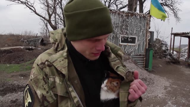 They fight rats depression and even serve in combat roles dogs and yes some cats have turned into a prized companion for fighters on both sides of...