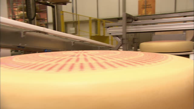 Thick pieces of cheese with designs on top move through a factory.