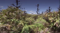 Thick Vegetation grows on the Galapagos Islands. Available in HD.